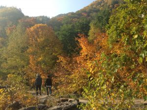 定山渓,紅葉