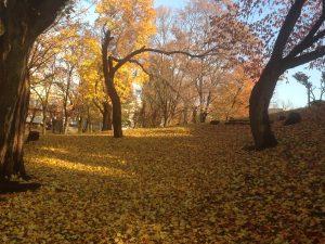 紅葉,常磐公園