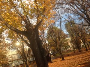 紅葉,常磐公園,あいこ様
