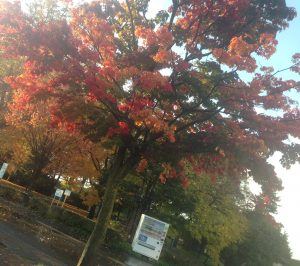 常磐公園,紅葉