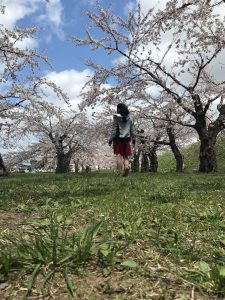 桜,五稜郭