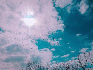 空,鳥,カモ,鴨